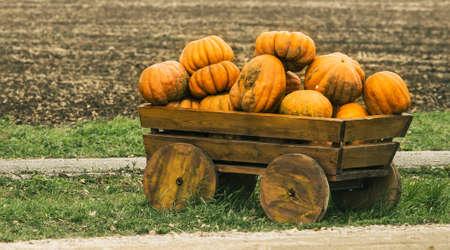 waggon: decorative cart laden by pumpkins