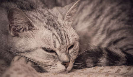 sleepping cat Stock Photo