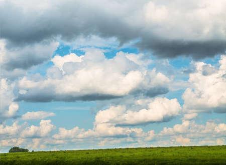 grassfield: field landscape