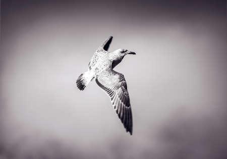 albatross at gale