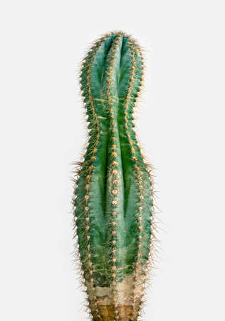 tropical plants: losing weight cactus
