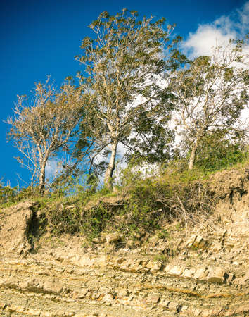 talus: trees above the scree