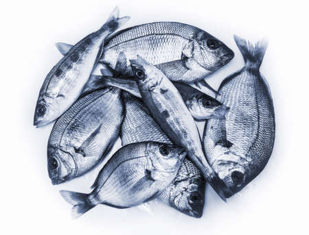 fresh sea fishes, isolated Stock Photo