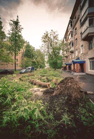 Street after windfall 版權商用圖片
