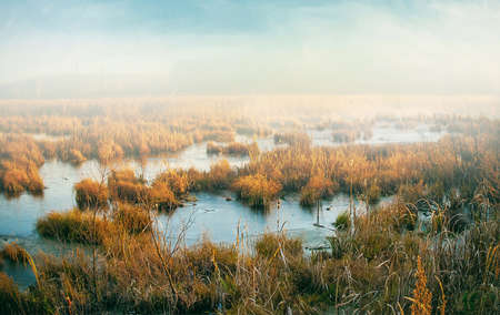winter foggy marshland
