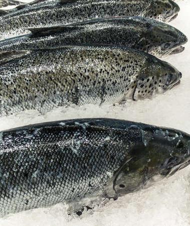 the big salmon in market Reklamní fotografie - 150083249