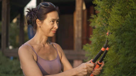 Woman holding hedge trimmer cutting green bush, female cutting bushes middle shot. Asian woman smiling look after the garden at the backyard of the private house at the sunset