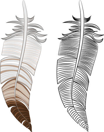 Feather illustration.