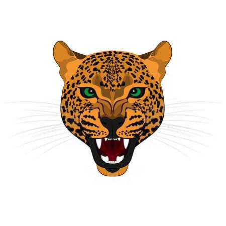 Head of roaring jaguar. Vector illustration 일러스트