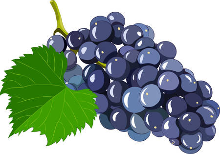 Grape isolated on white background. Vector illustration