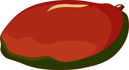 Mango isolated on white background. Vector illustration