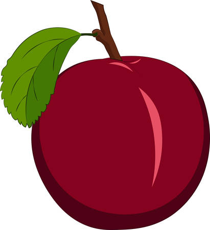 Red plum isolated on white background. Vector illustration
