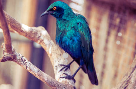 large bird: World of Birds is the largest bird park in Africa and one of the few large bird parks in the World. Stock Photo