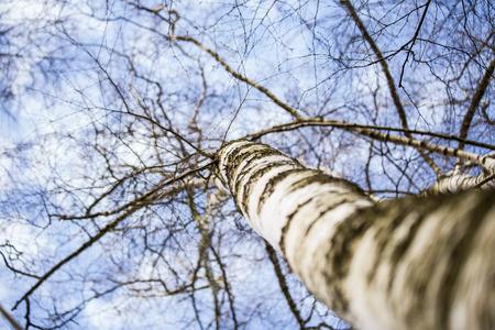 branch: branches