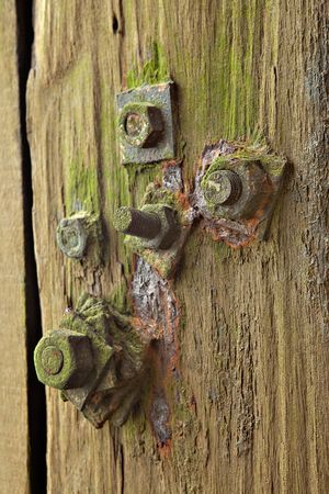 rusty screws in whetered wood covered with algae Stock Photo - 5756305