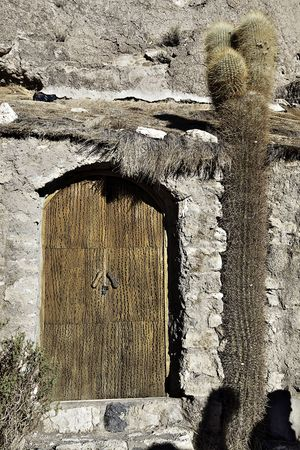 door of cactus wood in a brick wall including a living cactus photo