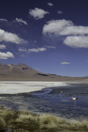 red lagoon or laguna colorada on the altiplano Bolivia flamingo high in the andes with copy space blue sunny day photo