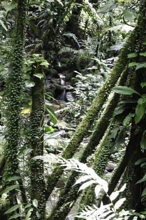tropical rain forest trees detail evergreen humid amazon forest photo