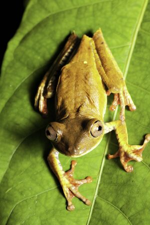 tree frog in tropical rain forest looking up Stock Photo - 6969089