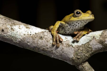 frog amphibian treefrog rainforest branch copy space isolated Stock Photo - 7147030