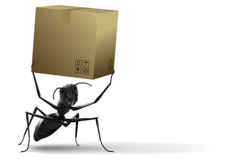 lift and carry: ant lifting cardboard box black insect white background isolated delivery shipping