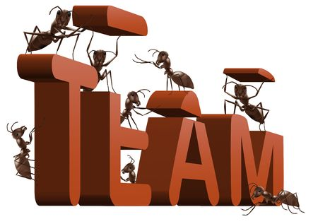 ant: ant team building or team working 3D word created or under construction by ants