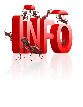 ants gathering info or information learn and educate knowledge photo