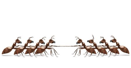 struggles: ant rope pulling business or sport competition and team work