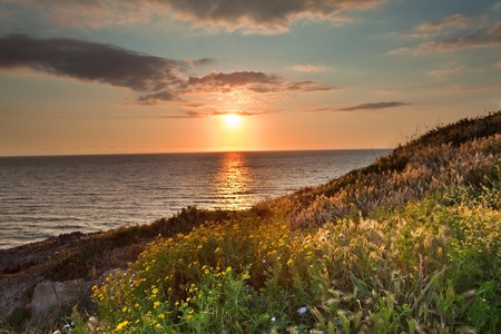 meadow: sunset flower meadow and ocean during spring with vivid bright colors over Italian sea at Sardinia tourism and holliday Stock Photo