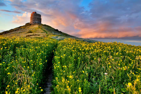 spring flower field with trail to castle tower vivid colors bright yellow pasture colorful spring meadow photo