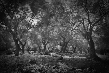 dark woods black and white spooky ghost forest  Reklamní fotografie