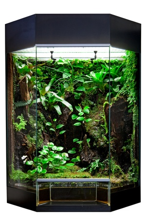 terrarium: terrarium or vivarium for keeping rainforest animal such as poison frog and lizards. Glass habitat pet tank with green moss and jungle vegetation. Tropical aimal cage.