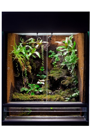 terrarium: rain forest terrarium to keep tropical jungle animals such as lizards and poison dart frogs. Glass tank with decoration for pet animal.