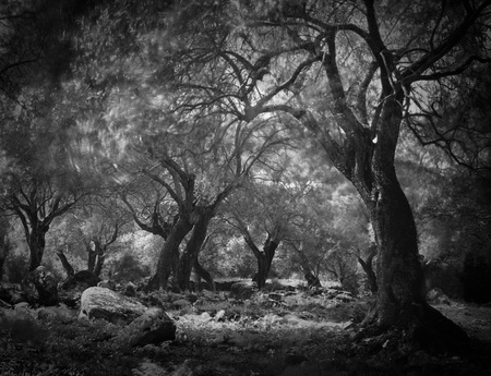 mysterieuze donkere geest bos, lange blootstelling leidt tot onscherpe bladeren. Spooky enge bos fantasy sprookje horror haloween bomen Stockfoto