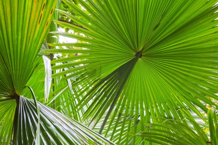 tropical rainforest: palm leaf detail exotic tropical jungle background rain forest pattern with lines vibrant green colors in rainforest