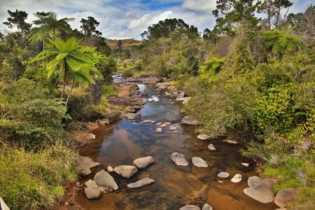 creek and fern trees in tropical tablelands Queensland Australia unspoild pristine and pure wilderness beautiful wild nature photo