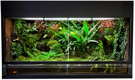 vivarium: terrarium for rain forest pet animals like exotic and tropical frogs lizards and snakes.