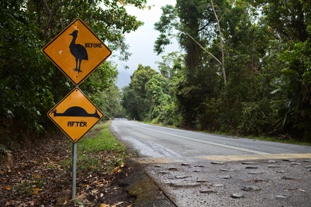 cassuwari sign endangered species needs nature conservation and protection flightless bird Queensland Australia photo