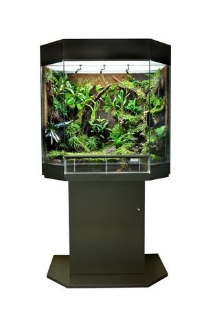 vivarium: terrarium or vivarium for keeping rainforest animal such as poison frog and lizards