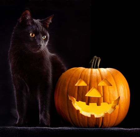helloween: Halloween pompoen en zwarte kat eng griezelig en griezelige horror holliday bijgeloof kwaad dier en jack lantaarn