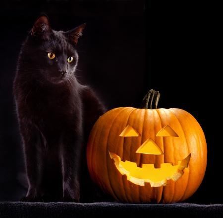 zucche halloween: Zucca di Halloween e nero gatto spaventoso spettrale e inquietante orrore degli animali superstizione Holliday male e lanterna