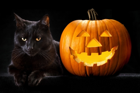 halloween black cat: Halloween pumpkin and black cat scary spooky and creepy horror holliday superstition evil animal and jack lantern