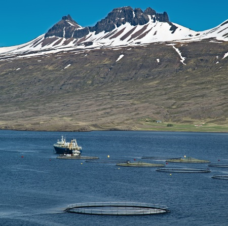aquaculture salmon fishing farm enclosure and boat in fjord Iceland sea fish farming in round net fishing industry Atlantic salmon photo