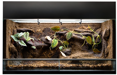 Terrarium to keep tropical jungle animals such as lizards and poison dart frogs. Glass tank with decoration for rain forest  pet animal. Stock Photo - 73204883