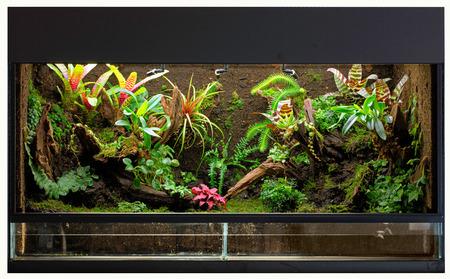 tropical rain forest terrarium or paludarium for rainforest animals like poison dart or tree frogs.