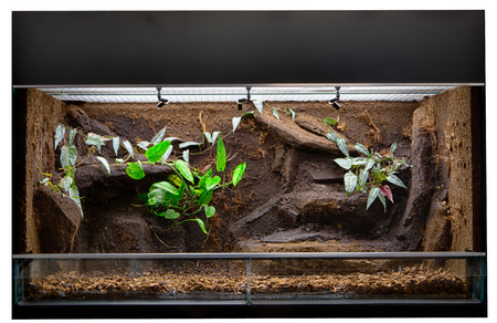 Terrarium to keep tropical jungle animals such as lizards and poison dart frogs. Glass tank with decoration for rain forest  pet animal. Standard-Bild - 99361051