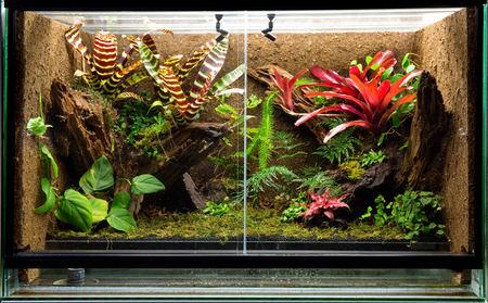 tropical rain forest terrarium. Pet tank vivarium for exotic frogs, lizards or gecko