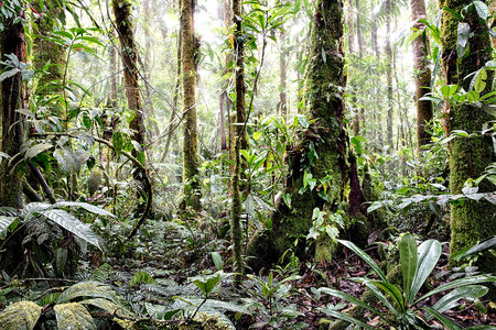 Tropical Amazon rain forest Colombia. Lush reen jungle vegetation with giant trees vines fern and moss Standard-Bild - 119076648