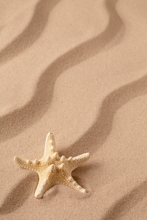 sea star or starfish on tropical beach sand. Sandy background with rippled lines and open copy space. Standard-Bild - 119667836