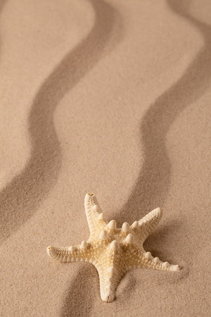 Starfish on the seashore and summer beach sand. Sea star on textured background with open copy space. Standard-Bild - 119667998